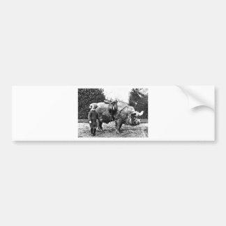 Hog Rider Bumper Sticker