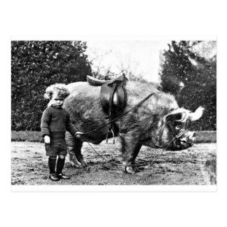 Hog Rider Postcard