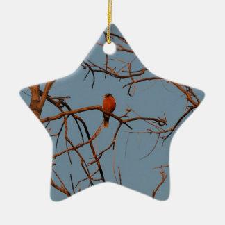 Hogar americano del petirrojo al gallinero adorno navideño de cerámica en forma de estrella