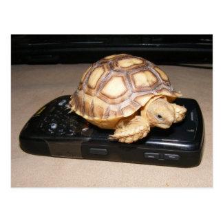 Hogar del teléfono de Rawr Postal