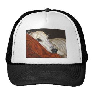 Hogar en el perro pasado del galgo gorras de camionero