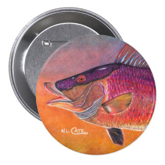 Hogfish Button