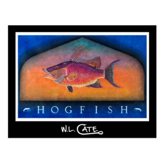 Hogfish Postcards