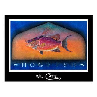 Hogfish Postcards
