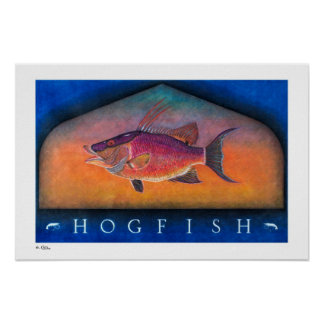 Hogfish Posters, Prints and Frames