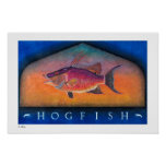 Hogfish Posters, Prints and Frames Poster