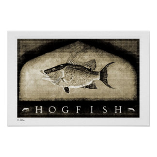 Hogfish Vintage B&W Posters, Prints and Frames