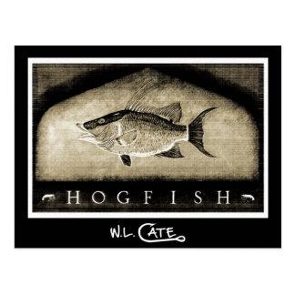 Hogfish Vintage Black & White Postcards