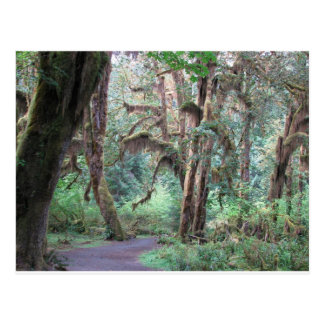 Hoh Rain Forest 2 - Olympic National Park Post Cards