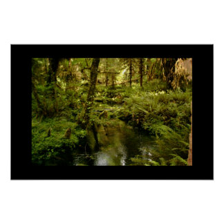 Hoh Rain Forest- Early 2001 Poster