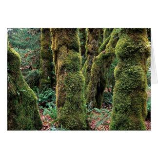 Hoh Rain Forest, Olympic National Park, Washington Greeting Card