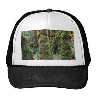 Hoh Rain Forest, Olympic National Park, Washington Trucker Hat