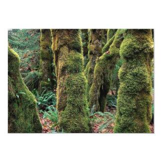 Hoh Rain Forest, Olympic National Park, Washington Announcement