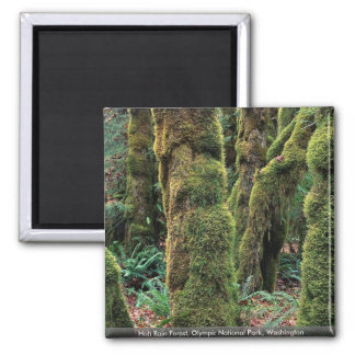 Hoh Rain Forest Olympic National Park Washington Magnet