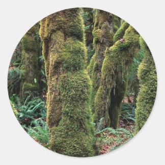 Hoh Rain Forest, Olympic National Park, Washington Sticker