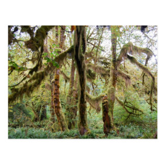 Hoh Rain Forest Post Cards
