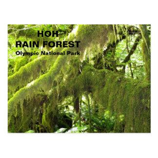 Hoh Rain Forest Postcard