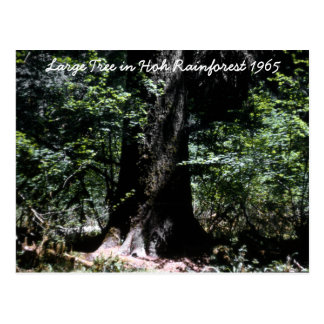 Hoh Rainforest  1965 Postcard