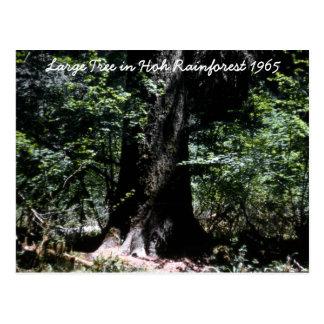 Hoh Rainforest  1965 Postcard