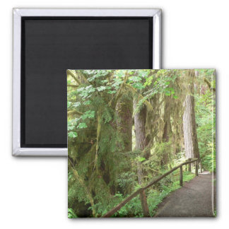 Hoh Valley Rain Forest 2 Inch Square Magnet