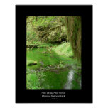 Hoh Valley Rain Forest Poster (stream)