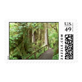 Hoh Valley Rainforest Postage