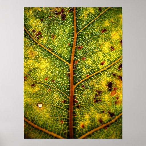 Hoja 3 del otoño posters
