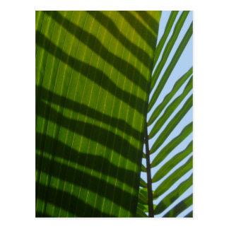 Hoja abstracta del verde de la fotografía postal