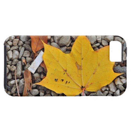 Hoja amarilla del otoño iPhone 5 fundas