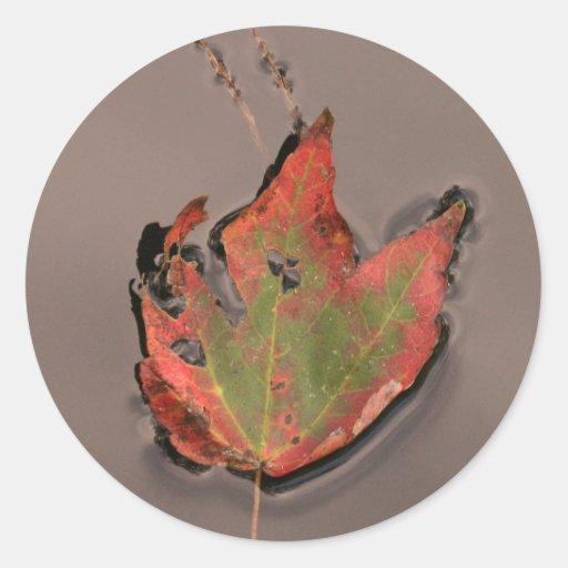Hoja caida del otoño, aguas del pantano etiquetas redondas
