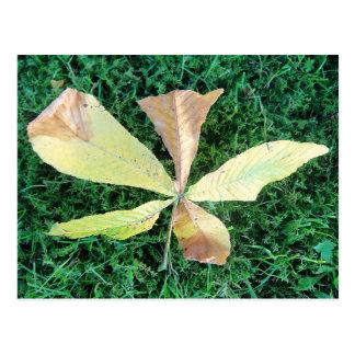 Hoja colorida del árbol de castaña postales