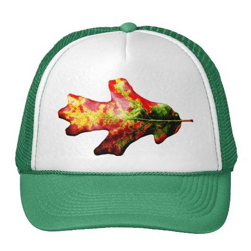 Hoja colorida del roble del otoño gorros bordados