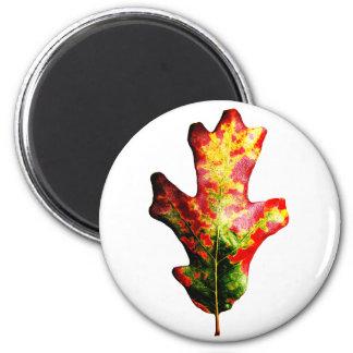 Hoja colorida del roble del otoño iman de nevera