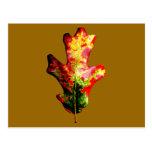 Hoja colorida del roble del otoño tarjeta postal