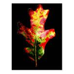 Hoja colorida del roble del otoño tarjetas postales