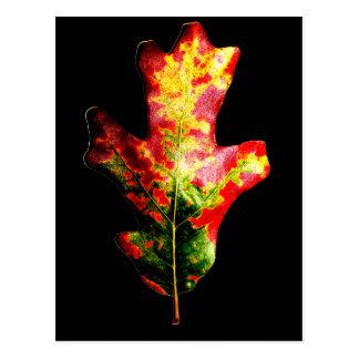 Hoja colorida del roble del otoño postal