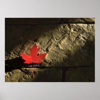 Hoja de arce de Canadá Póster