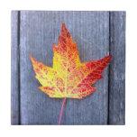Hoja de arce del otoño azulejo cerámica