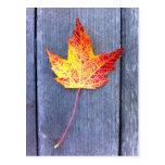 Hoja de arce del otoño tarjetas postales
