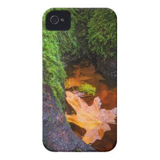 Hoja de arce flotante, Oregon, los E.E.U.U. Case-Mate iPhone 4 Protectores