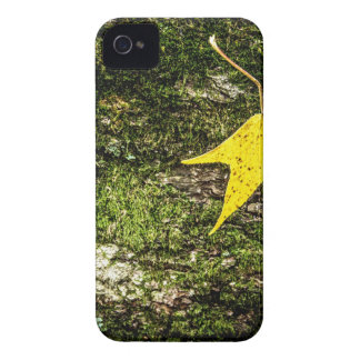 Hoja de la caída en musgo iPhone 4 cobertura