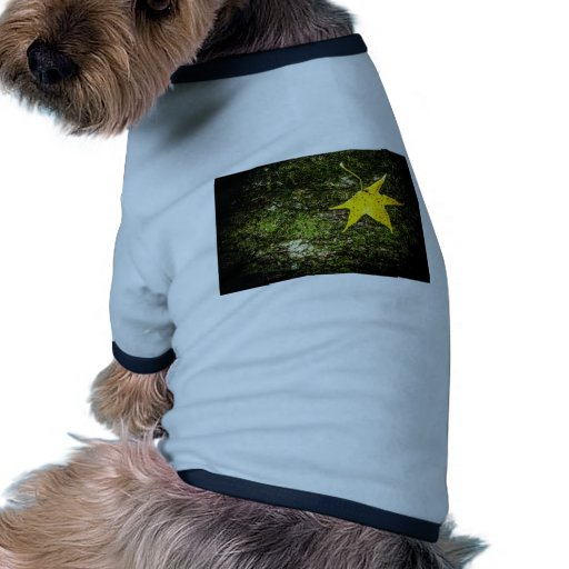 Hoja de la caída en musgo prenda mascota