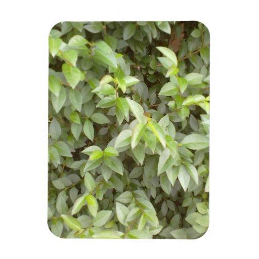 Hoja de la planta verde iman de vinilo