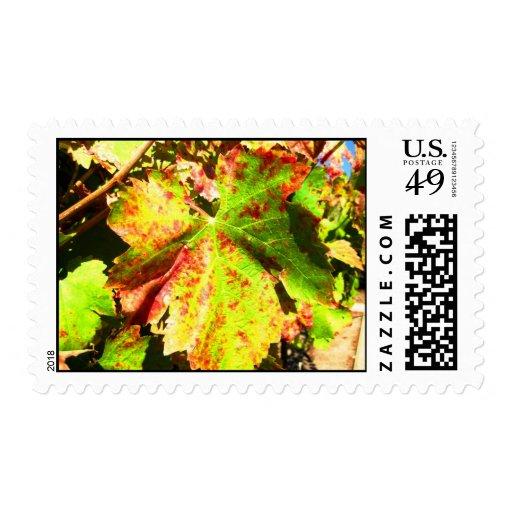 Hoja de la uva de Healdsburg Franqueo