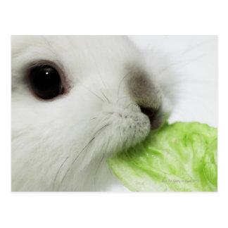 Hoja de mordisco de la lechuga del conejo, primer postales