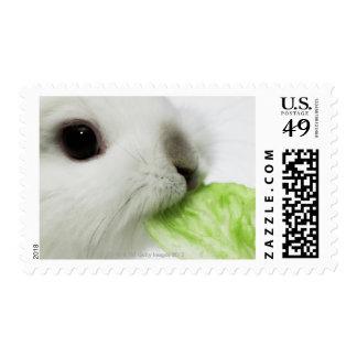 Hoja de mordisco de la lechuga del conejo, primer sello