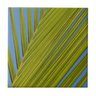 Hoja de palma tejas  cerámicas