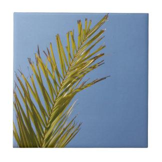 Hoja de palma tejas