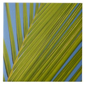 Hoja de palma azulejo cerámica