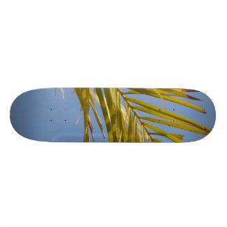 Hoja de palma tablas de skate
